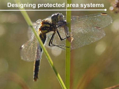 Gap analysis presentation: November 2008 Designing protected area systems.