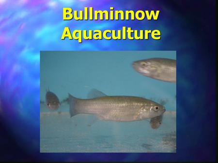 Bullminnow Aquaculture. n Scientific Name –Fundulus grandis n Common Name –Gulf Killifish n Regional Names –Bullminnow - Alabama –Mudminnow - Texas –Cocahoe.