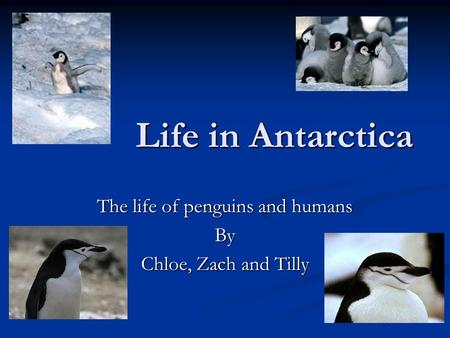 Life in Antarctica The life of penguins and humans By Chloe, Zach and Tilly.