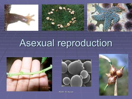 Asexual reproduction ADJH- H. Aucoin. How do cells make new cells What happens when you cut a worm in half? Why do you think you can grow new skin over.
