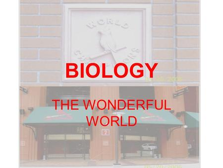 BIOLOGY THE WONDERFUL WORLD. Tracy Mize Biology S and Biology G E-mail is best way to contact me Also work as Athletic Trainer.
