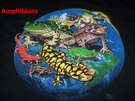Amphibians. Amphibian Any of a class (Amphibia) of cold- blooded vertebrates (as frogs, toads, or salamanders) intermediate in many characters between.