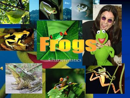 "Characteristics. Frog Life Cycle The Word Amphibian means ""both lives"". Frogs and toads have lives in the water as tadpoles and on land when they are."
