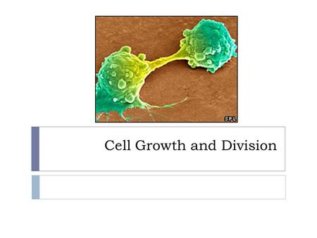 Cell Growth and Division. The Cell Cycle  The cycle of growth, DNA synthesis, and division is essential for an organism to grow and heal.  If it goes.
