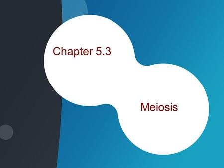 Chapter 5.3 Meiosis. Chromosomes –Contain instructions for traits –Found on Genes Segments of DNA Code for specific proteins –46 found in the human cells.