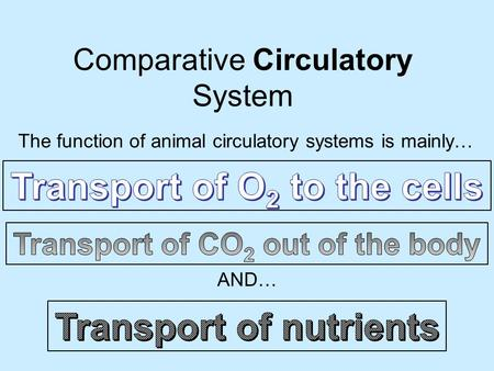 Comparative Circulatory System