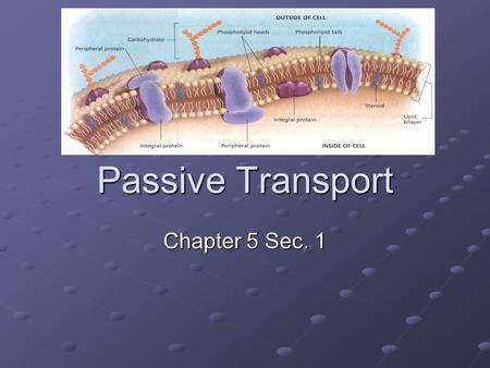 Passive Transport Chapter 5 Sec. 1. Passive Transport Cells must maintain Homeostasis Passive Transport allows materials to cross the cell membrane without.