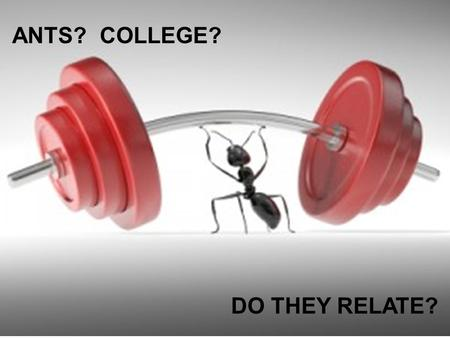 ANTS? COLLEGE? DO THEY RELATE?. 3 Simple Steps for Any Application APPLY NAVIANCE TRACK.