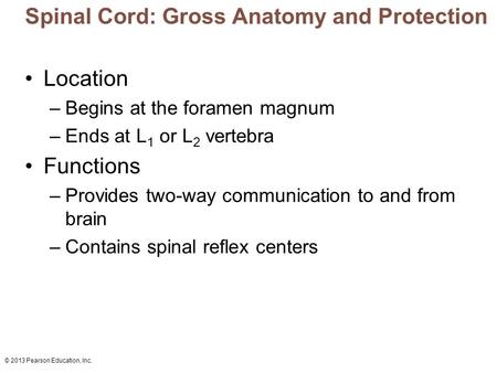 © 2013 Pearson Education, Inc. Spinal Cord: Gross Anatomy and Protection Location –Begins at the foramen magnum –Ends at L 1 or L 2 vertebra Functions.