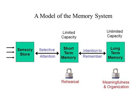 Sensory Store Short Term Memory Long Term Memory Selective Attention Rehearsal Limited Capacity Meaningfulness & Organization A Model of the Memory System.