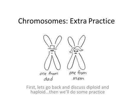 Chromosomes: Extra Practice First, lets go back and discuss diploid and haploid…then we'll do some practice.