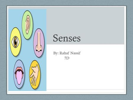 Senses By: Rahaf Nassif 7D. Touch Nerve endings in the skin send massages to the brain that tell us about what we are touching, such as whether if it's.