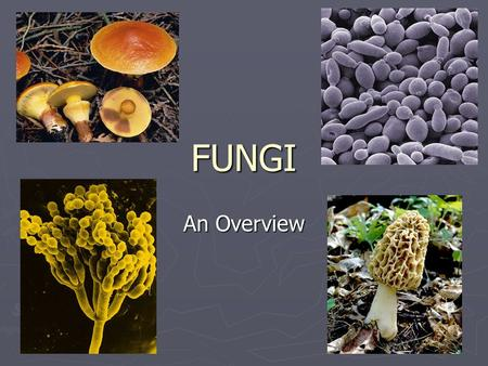 FUNGI An Overview. Characteristics of Fungi ► Eukaryotic ► Nonphotosynthetic ( heterotrophic) ► Most are multicellular ► Most are microscopic molds or.
