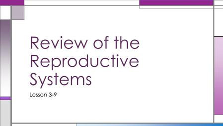 Lesson 3-9 Review of the Reproductive Systems. Get out Student Journal, Lesson 7 Journal Entry Write a few sentences to describe which dimension is most.