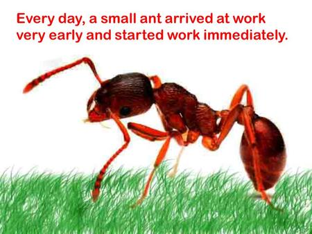 Every day, a small ant arrived at work very early and started work immediately.