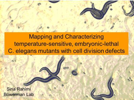 Mapping and Characterizing temperature-sensitive, embryonic-lethal C. elegans mutants with cell division defects Sina Rahimi Bowerman Lab.