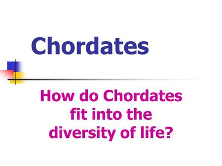 Chordates How do Chordates fit into the diversity of life?