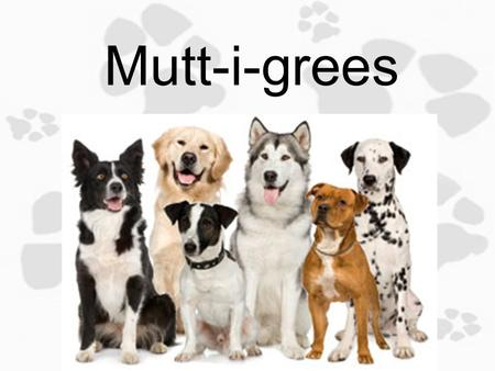 Mutt-i-grees 1.3 Get a Compliment, Give a Compliment Objective: Today you will identify personal traits/characteristics that you like about yourself.