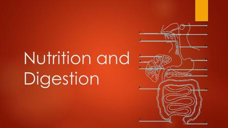 Nutrition and Digestion. The importance of microflora in digestion: