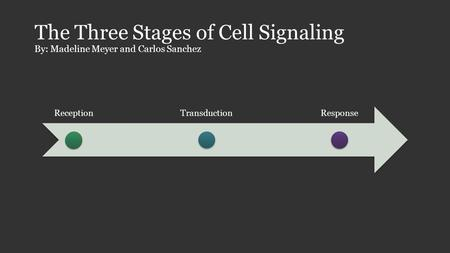 The Three Stages of Cell Signaling By: Madeline Meyer and Carlos Sanchez ReceptionTransductionResponse.