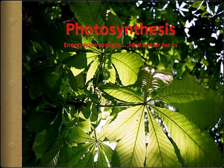 Photosynthesis is cellular respiration in reverse for plants  In animals, we use GLUCOSE and OXYGEN to create energy.  The mitochondria (power plant)