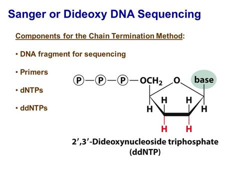 Sanger or Dideoxy DNA Sequencing Components for the Chain Termination Method: DNA fragment for sequencing Primers dNTPs ddNTPs.