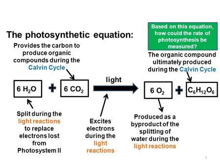 Photosynthesis: A Recap 1 Based on this equation, how could the rate of photosynthesis be measured? The photosynthetic equation: light Excites electrons.