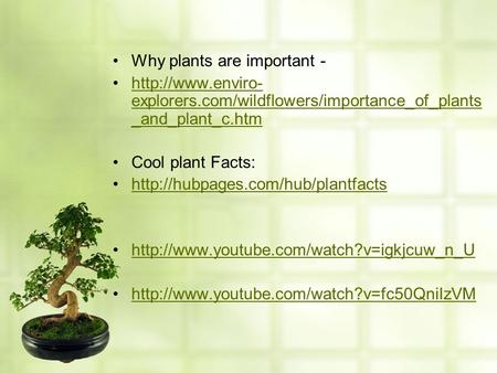 Why plants are important -  explorers.com/wildflowers/importance_of_plants _and_plant_c.htmhttp://www.enviro- explorers.com/wildflowers/importance_of_plants.