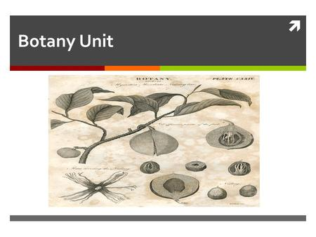  Botany Unit. Plant Systematics  Basic process in plant taxonomy  Cataloging  Identifying  Classifying.