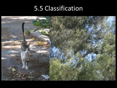 5.5 Classification. Taxonomy Taxonomy is the scientific discipline that attempts to identify, classify and name living things.