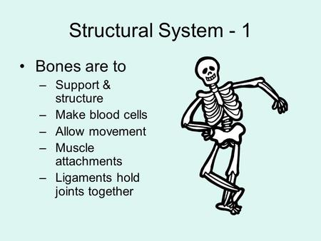 Structural System - 1 Bones are to –Support & structure –Make blood cells –Allow movement –Muscle attachments –Ligaments hold joints together.