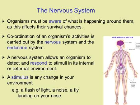  Organisms must be aware of what is happening around them, as this affects their survival chances. The Nervous System  A nervous system allows an organism.