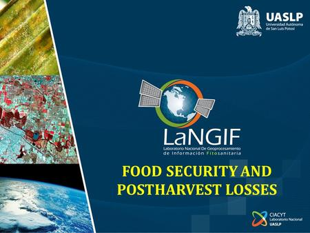 FOOD SECURITY AND POSTHARVEST LOSSES. FOOD SECURITY AND POSTHARVEST LOSSES.