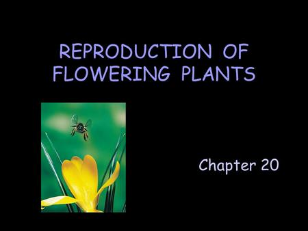 Chapter 20 REPRODUCTION OF FLOWERING PLANTS. A. Asexual Reproduction Parent plant produces progeny that are genetically identical to it and to each other.