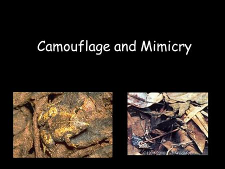Camouflage and Mimicry. Camouflage Have you ever wondered why animals have spots, strips, or certain colors? Sometimes an animal's colors can be a difference.