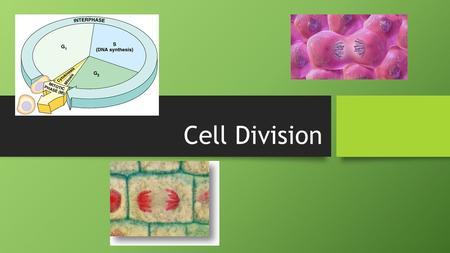 Cell Division Cell division Biology is the only subject in which multiplication is the same as division.