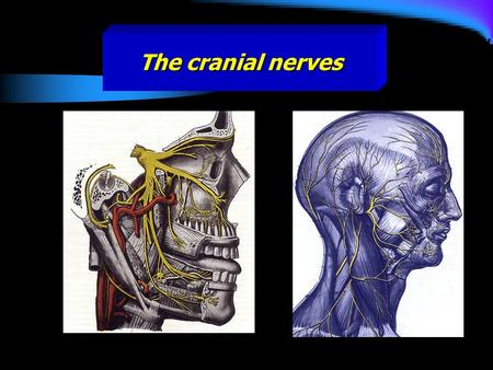 The cranial nerves. These are twelve pairs and numbered from before backward. All the nerves are distributed in the head and neck except the tenth which.