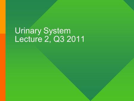 Urinary System Lecture 2, Q3 2011. Nephron functional unit of the kidney.