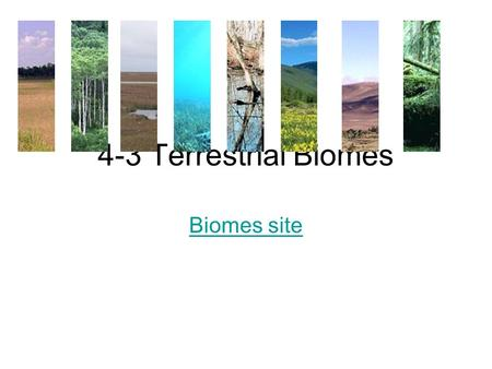 4-3 Terrestrial Biomes Biomes site. 1.Biome A. Complex terrestrial communities that: 1. covers a large area. 2. characterized by certain soil and climate.