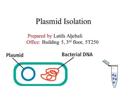 Plasmid Isolation Prepared by Latifa Aljebali Office: Building 5, 3 rd floor, 5T250.