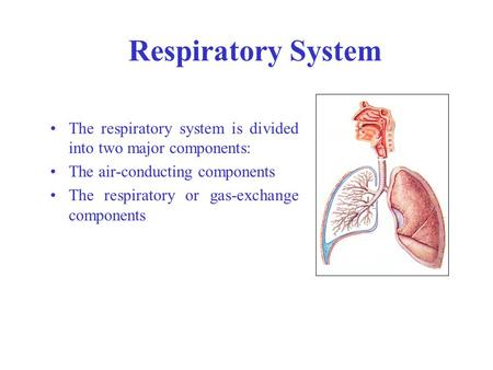 Respiratory System The respiratory system is divided into two major components: The air-conducting components The respiratory or gas-exchange components.