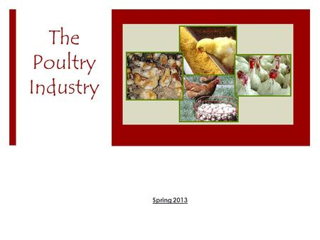The Poultry Industry Spring 2013. U.S. Poultry Industry  Broilers  Eggs  Turkey.