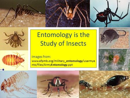 Entomology is the Study of Insects Images from: www.afpmb.org/military_entomology/usarmye nto/files/ArmyEntomology.ppt.