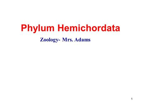 "1 Phylum Hemichordata Zoology- Mrs. Adams. ""Half Chordate"" Hemichordates display some characteristics of invertebrates and vertebrates Coelomates Deuterostomes."