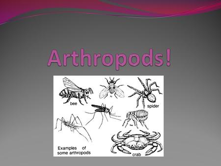 Arthropods: Arthropods constitute over 90% of the animal kingdom. ***First phylum to have joints*** The word Arthropod literally means jointed legs. ***First.