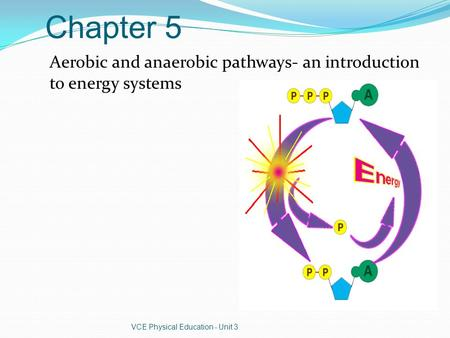Chapter 5 Aerobic and anaerobic pathways- an introduction to energy systems VCE Physical Education - Unit 3.