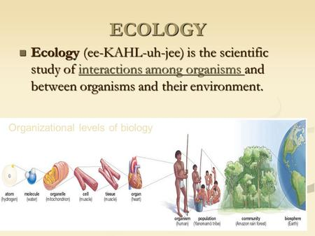 ECOLOGY Ecology (ee-KAHL-uh-jee) is the scientific study of interactions among organisms and between organisms and their environment. Ecology (ee-KAHL-uh-jee)