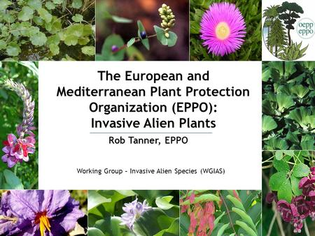 The European and Mediterranean Plant Protection Organization (EPPO): Invasive Alien Plants Rob Tanner, EPPO Working Group – Invasive Alien Species (WGIAS)