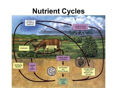Nutrient Cycles. Nutrients are _________ that are essential to ______ organisms and that are cycled through the ecosystem There are four major nutrient.