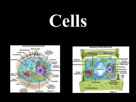 Cells. Cell Theory All living things are made of cells Cells are the basic units of structure, function and physiology in living things Living cells can.